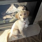 Our puppy in front of the fireplace