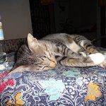 サランルームズの看板猫