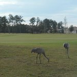 Looking Back at hole #6 and familiar Crane