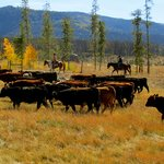 Cattle round up during September adult only stays