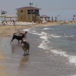 playa solo para perros