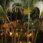 Vista nocturna del jardin