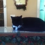shadow the inn cat!!