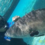 "Hotel Arranged Snorkel Tour ""Big Sexy"" & Grouper"