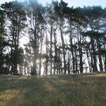 Pine trees near the transmitter tower ... a different occasion, earlier in the
