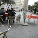 Even the Dogs love it at Piazza Caffe
