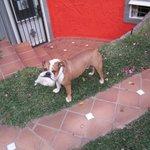The dog :-)