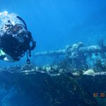 Elbow Beach diving - a bus ride away