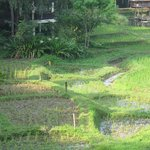 More rice paddies :)