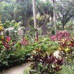 Garten mit Takamaka-Bäume und Mangroven