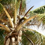 Palmtree at the beach