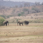 Elephants at Mpila Camp