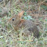Not-so-afraid Bunny on the VA side