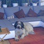 idefix, il cucciolo di casa