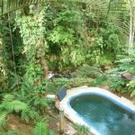pool and overhead forest canopy