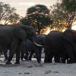 gli elefanti non mancano