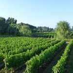 the winefields of vila chillan