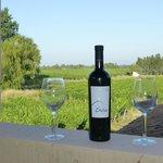 ecological wine