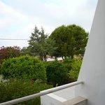 Lemon Tree Apartments Foto