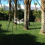 Hammocks and Palms