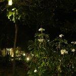 jardin la nuit...quel calme...