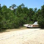 Mangroves and beach