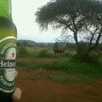 Enjoying a Heineken with Rhino's looking on