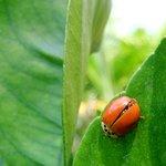 Lady Bug