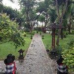 Main garden area