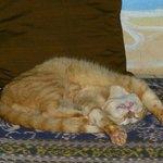 Head cat
