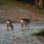 Park resident deer