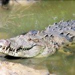 ACES Educational Crocodile Eco-Sanctuary