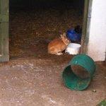 rabbit in petting farm.