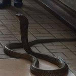 Snake farm Bangkok