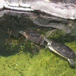 Turtle display