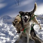 Two of the dogsled team