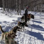 """Our musher """"Whiskey"""" with his team"""