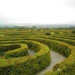 Castlewellan Maze Forest Park