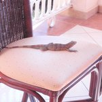 Our little friend joing us for dinner at the pool buffet!