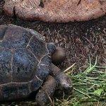 Die Schildkröten der Anlage