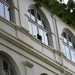 Besuch von einem neugierigen Affen