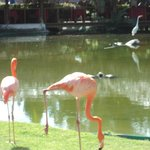 Beautiful flamingos that grace the grounds.