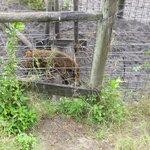 Critters - Wild Boar
