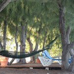 Hollywood Hammock