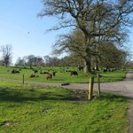Tullynally Castle, Castlepollard, Westmeath... grounds with cows