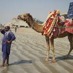 Camel Ride at Hawks Bay