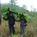 Palm umbrellas