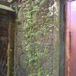 Moss on mural