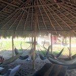 The hammoks