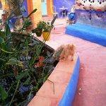 Koi pond in the indoor garden area